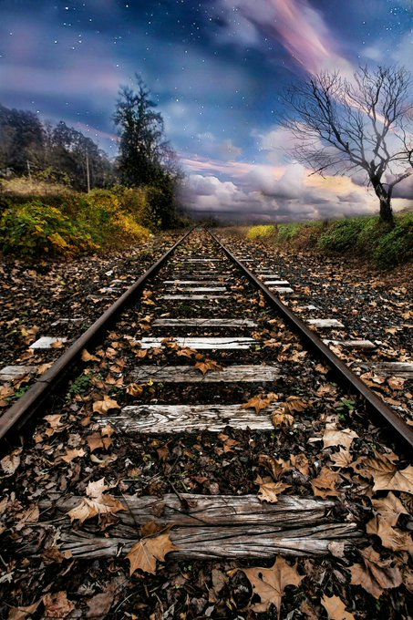 Leafy Lonely Tracks